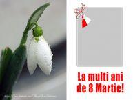 Personalizare felicitari de Ziua femeii 8 martie | La multi ani de 8 Martie!