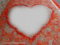 Personalizare felicitari    Inima pe asfalt